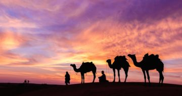 Health and Diseases of Camel